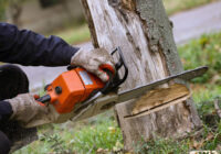 Tree Service In Stoughton MA – What to Look For